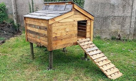 Wood pallet furniture ideas plans and diy projects Chicken coop from pallet wood