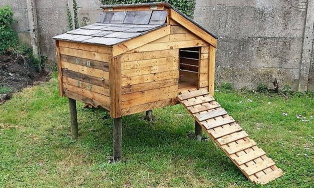Chicken Coop Out of Recycled Wooden Pallets