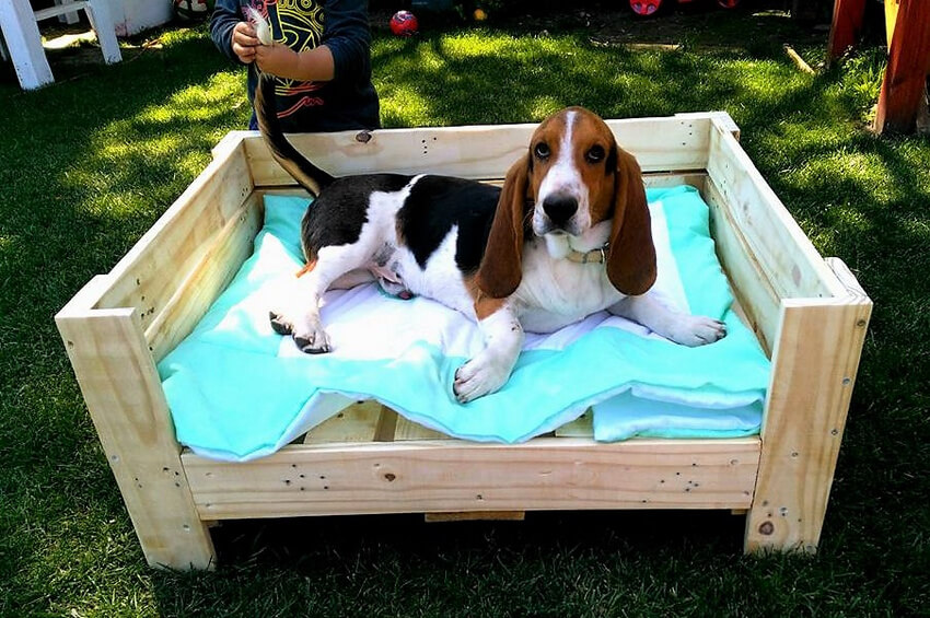 dog bed made with pallts